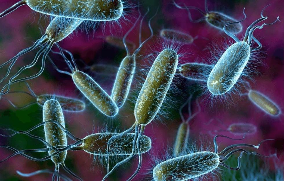 Бактерии, вызывающие простатит