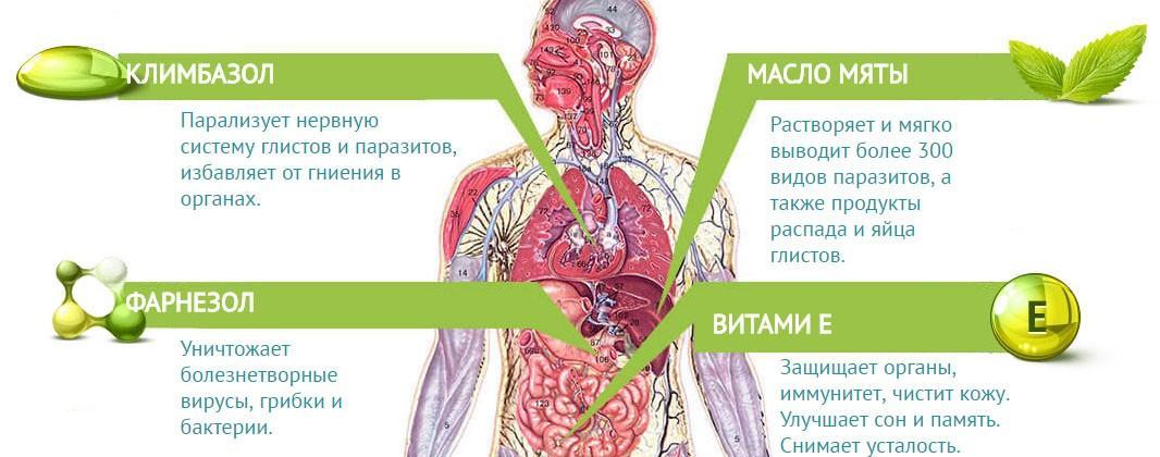 Что входит в Tinedol и действие компонентов на организм