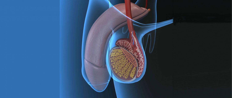 Простатит симптомы боли яичка полынь от простатита