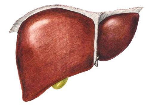 Азитромицин и алкоголь воздействие на печень