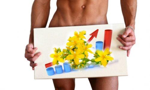 Зверобой для повышения мужской потенции