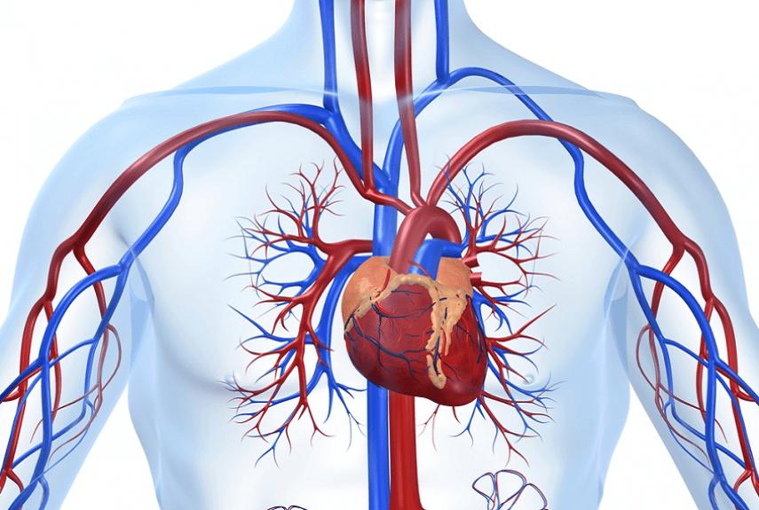 Флуконазол с алкоголем и сердце
