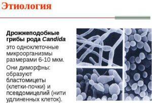 Дрожжеподобные грибы рода Кандида