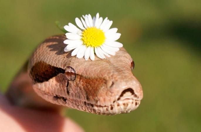 Змеи в лечении