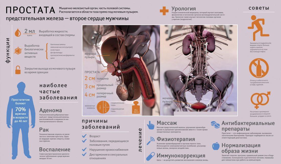 Почки как причина простатита простатит неврастения
