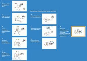 Действие препарата Аллокин-альфа