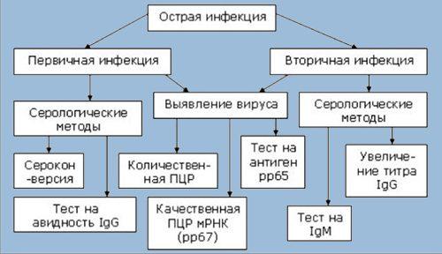 Диагностика цитомегаловируса