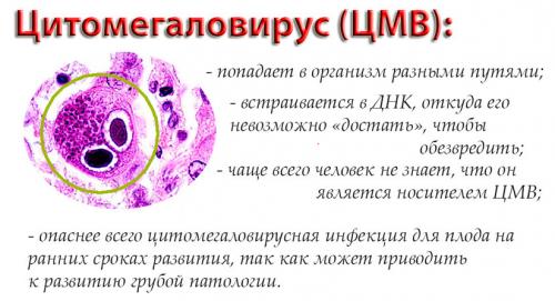 Особенности цитомегаловируса