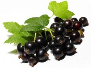 Плоды черной смородины