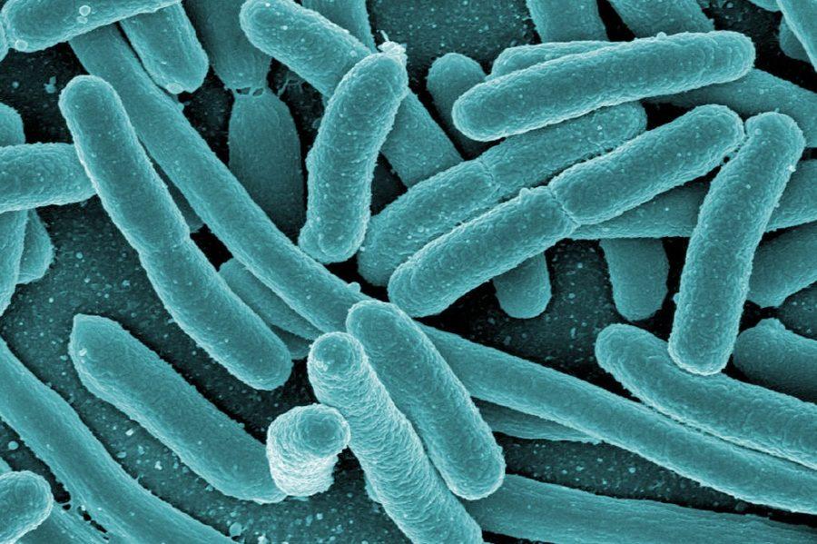 Инфекции, вызывающие простатит