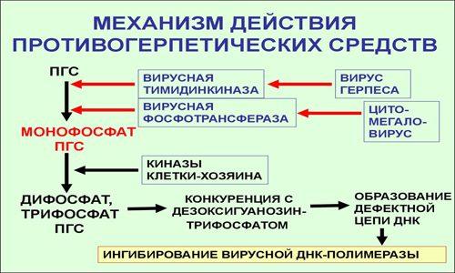 Действие противогерпетических средств