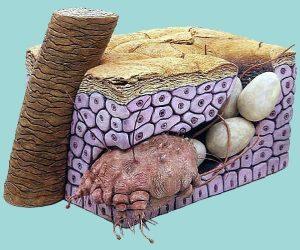 Откладывание яиц