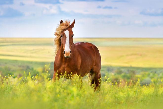 Лошади для лечения