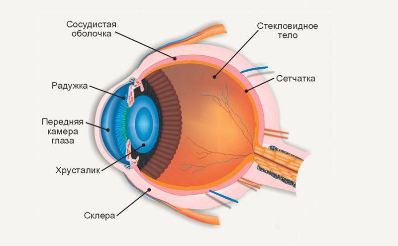 Строение глаза